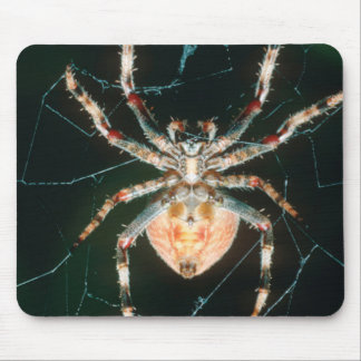 Red-Legged Orb-Web Spider Mouse Pad