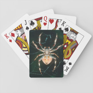Red-Legged Orb-Web Spider Deck Of Cards