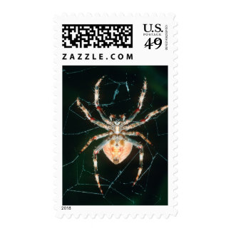 Red-Legged Orb-Web Spider Stamps
