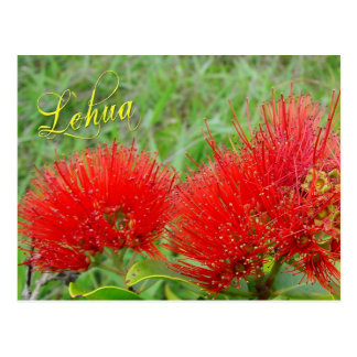 Red Lehua flowers in Maui Postcard