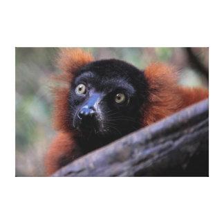 Red Lemur Wildlife Animal Photo Canvas Prints