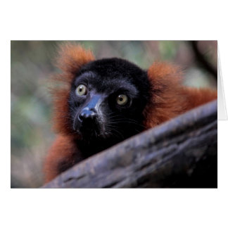 Red Lemur Wildlife Animal Photo Card