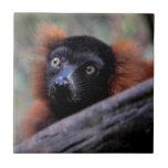 Red Lemur Wildlife Animal Photo Ceramic Tile