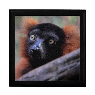 Red Lemur Wildlife Animal Photo Jewelry Boxes