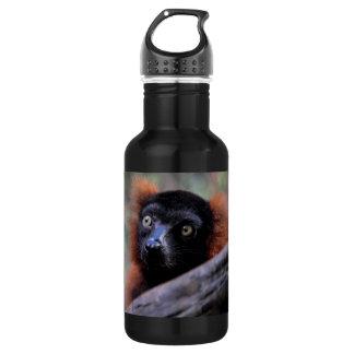 Red Lemur Wildlife Animal Photo Stainless Steel Water Bottle