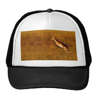 Red Letchwe jumping wildlife hats