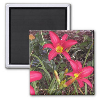 'Red Lilies' 2 Inch Square Magnet