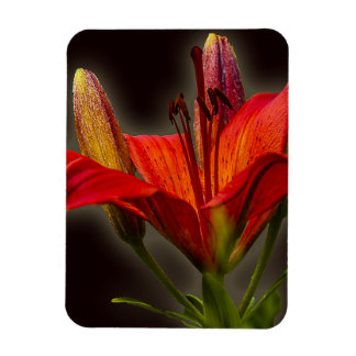 RED LILIES DIGITAL REALISM FLOWERS BACKGROUNDS WAL RECTANGULAR PHOTO MAGNET