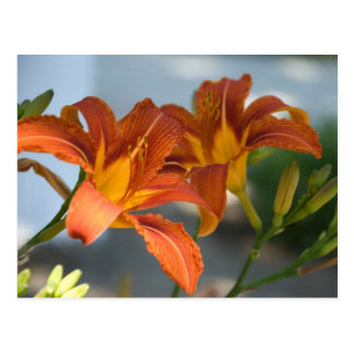red lilies postcard