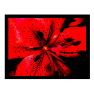 Red Lilly Postcard