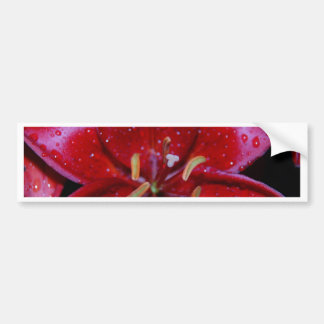 Red Lily After Rainfall Bumper Sticker