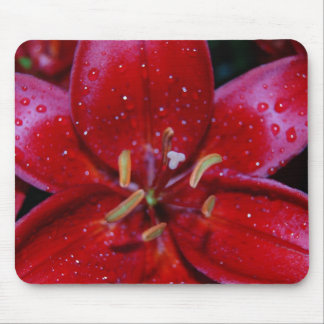 Red Lily After Rainfall Mouse Pad