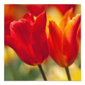 Red Lily-flowered Tulips Card