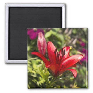 Red lily refrigerator magnets