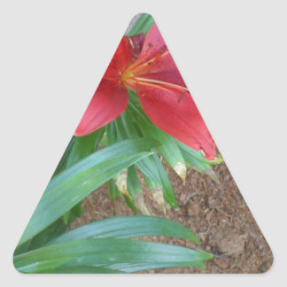 Red Lily Triangle Sticker