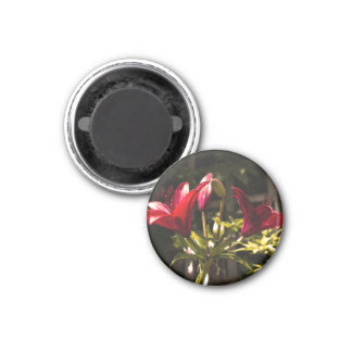 Red lilys magnet