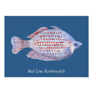 Red Line Rainbowfish. Watercolor Painting. Poster