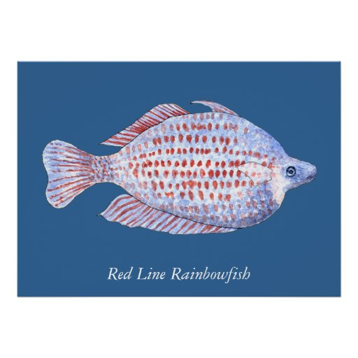 Red Line Rainbowfish. Watercolor Painting. Posters