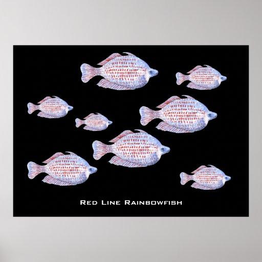Red Line Rainbowfish. Watercolor. Posters