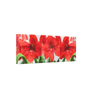 "Red Lion Amaryllis Canvas Print 36""x12"""