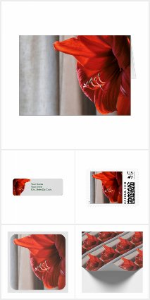 Red Lion Amaryllis Cards & Wrapping Supplies