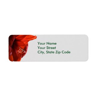 Red Lion Amaryllis Flower Christmas address labels