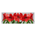 Red Lion Amaryllis Poster 36x12 in 4 paper types