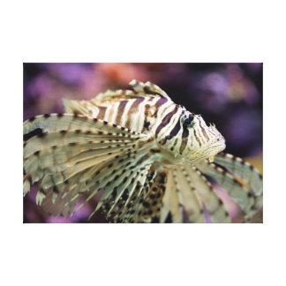 Red lionfish (Pterois volitans) Canvas Print