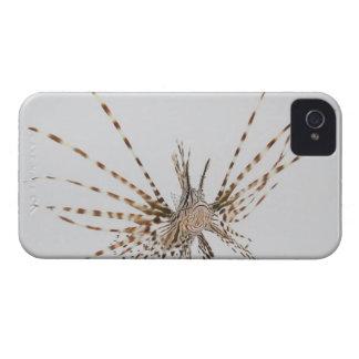 Red lionfish (Pterois volitans) Case-Mate iPhone 4 Case