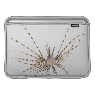 Red lionfish (Pterois volitans) MacBook Air Sleeves