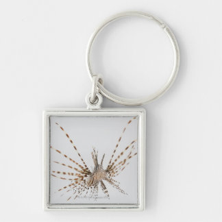 Red lionfish (Pterois volitans) Silver-Colored Square Keychain