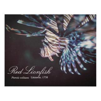 Red lionfish (Pterois volitans ,Linnaeus, 1758) Panel Wall Art