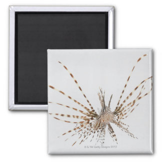 Red lionfish (Pterois volitans) Refrigerator Magnets