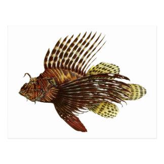 Red Lionfish Vintage Print Postcard