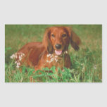 Red Long Haired Dachshund Sticker
