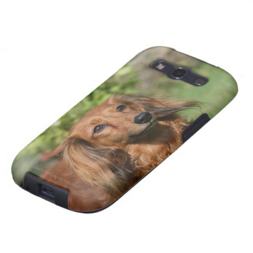 Red Long-haired Miniature Dachshund Samsung Galaxy S3 Covers
