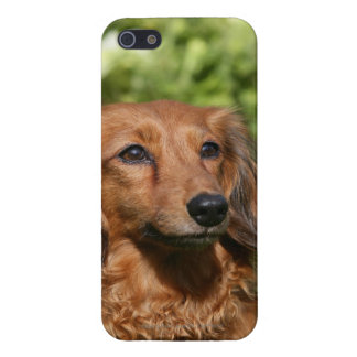 Red Long-haired Miniature Dachshund Case For iPhone SE/5/5s