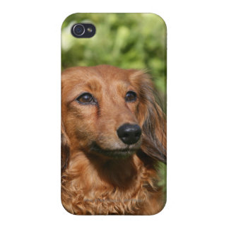 Red Long-haired Miniature Dachshund Cover For iPhone 4