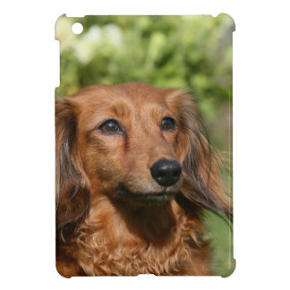 Red Long-haired Miniature Dachshund iPad Mini Covers