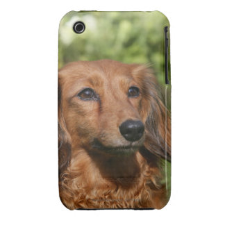 Red Long-haired Miniature Dachshund iPhone 3 Case-Mate Case