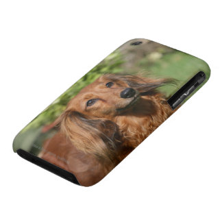 Red Long-haired Miniature Dachshund iPhone 3 Covers