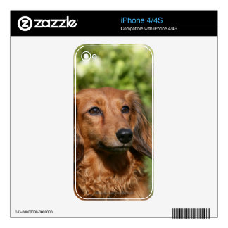 Red Long-haired Miniature Dachshund iPhone 4S Decals