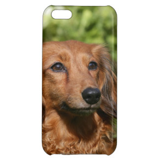 Red Long-haired Miniature Dachshund iPhone 5C Cover