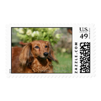 Red Long-haired Miniature Dachshund Postage