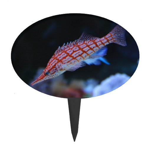 Red Longnose Hawkfish Oval Cake Toppers