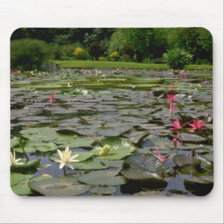 Red Lotus pond flowers Mouse Pad