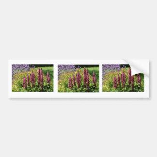 Red lupin flowers bumper sticker