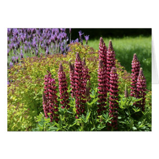 Red lupin flowers card