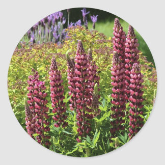 Red lupin flowers classic round sticker