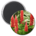 Red Lupin Flowers Magnet